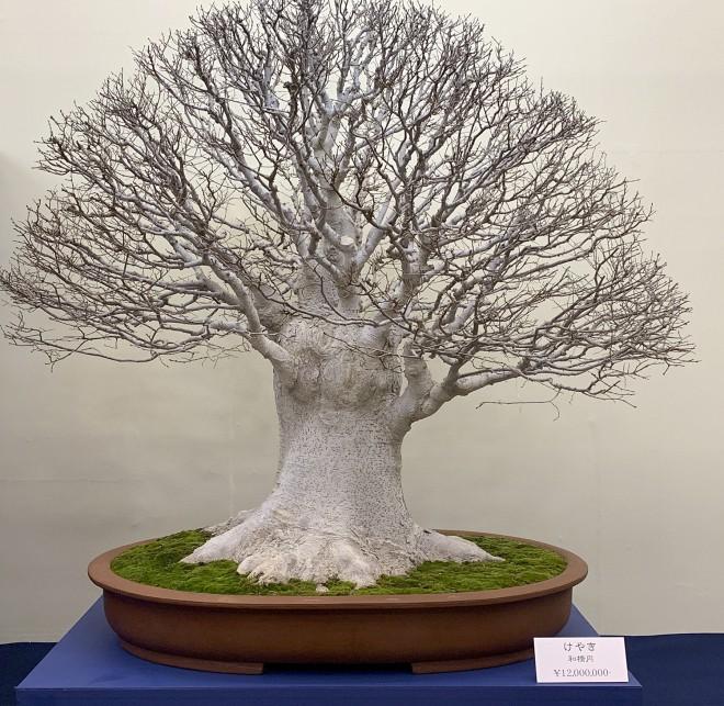 Tuyệt tác bonsai Nhật giá cắt cổ 3,8 tỷ đồng trông như thế nào? - Ảnh 6.