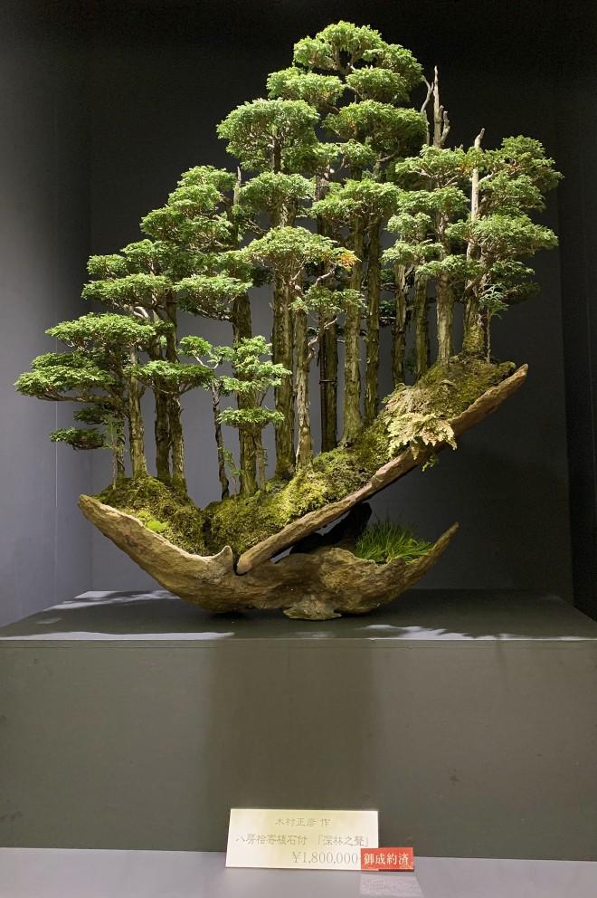 Tuyệt tác bonsai Nhật giá cắt cổ 3,8 tỷ đồng trông như thế nào? - Ảnh 9.