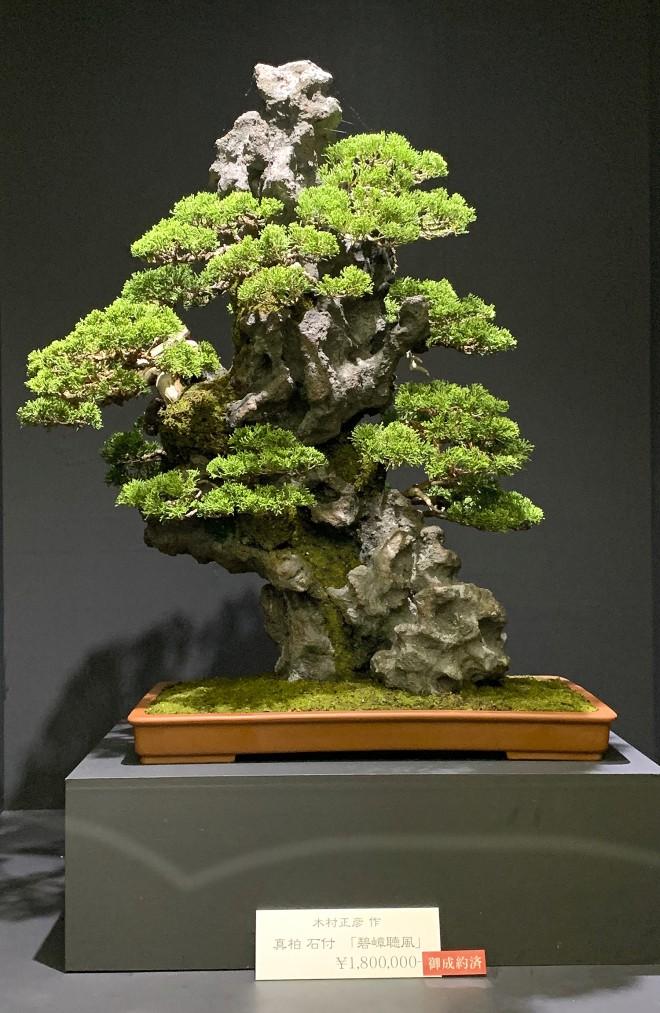 Tuyệt tác bonsai Nhật giá cắt cổ 3,8 tỷ đồng trông như thế nào? - Ảnh 10.