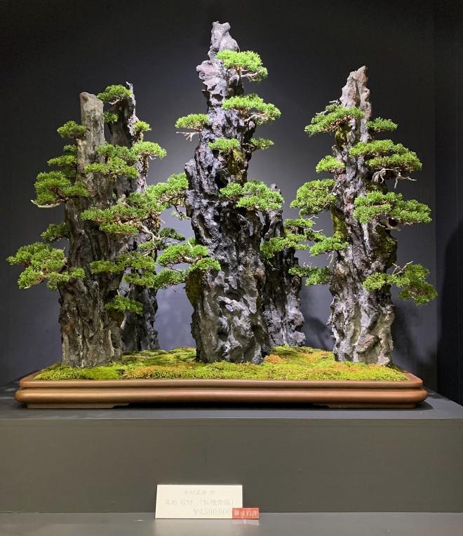 Tuyệt tác bonsai Nhật giá cắt cổ 3,8 tỷ đồng trông như thế nào? - Ảnh 7.