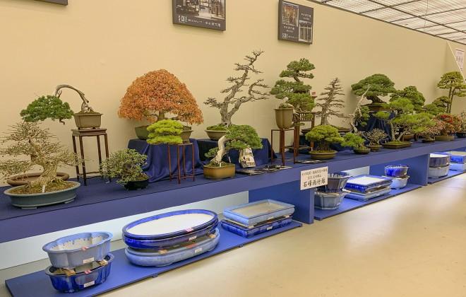 Tuyệt tác bonsai Nhật giá cắt cổ 3,8 tỷ đồng trông như thế nào? - Ảnh 17.