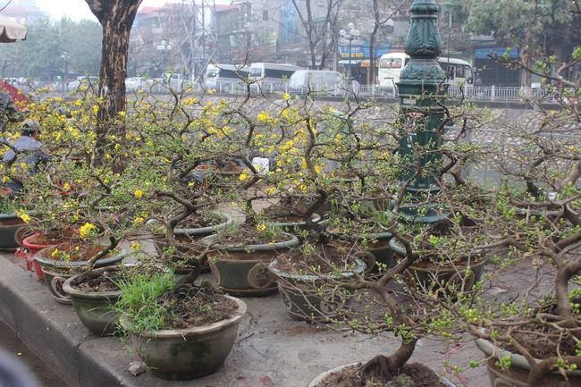 Tranh cãi cực gắt của dân mạng trước lời khuyên đừng đợi đến 30 mới mua hoa Tết - Ảnh 1.