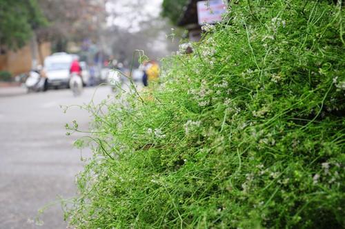 Những tác dụng tuyệt vời của rau mùi ngày Tết - Ảnh 6.