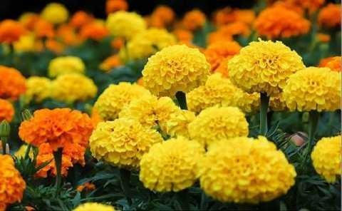 Cực kỳ kiêng kỵ với những loài hoa này trên bàn thờ ngày Tết - Ảnh 3.