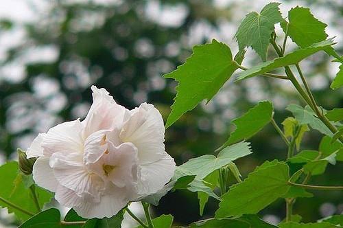 Cực kỳ kiêng kỵ với những loài hoa này trên bàn thờ ngày Tết - Ảnh 4.