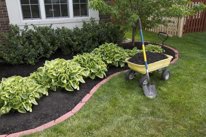 Nếu yêu thích làm vườn, hãy học ngay 8 cách diệt cỏ dại bằng nguyên liệu tự nhiên vừa hiệu quả vừa an toàn - Ảnh 8.