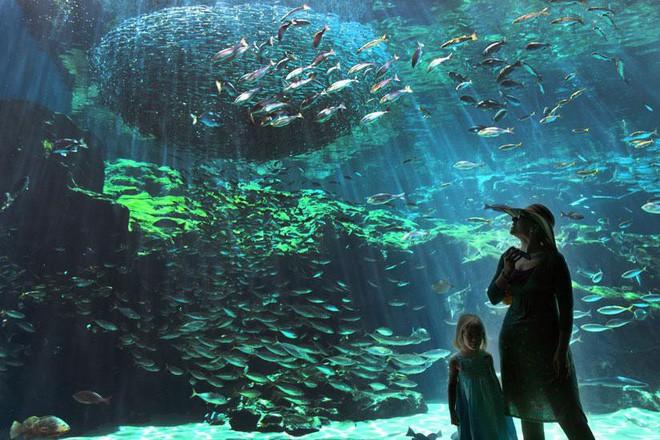 Quần đảo tựa như Hạ Long thu nhỏ tại Nhật Bản và bản giao hưởng của loài sứa - Ảnh 7.