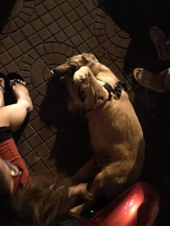 Nửa đêm nghe chó sủa vang, tông cửa ầm ầm, chủ nhà chạy ra thì thấy thảm cảnh sắp đến - ảnh 1