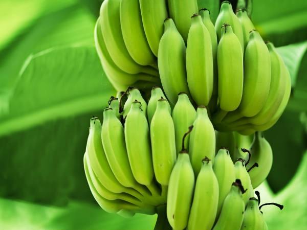 Chuối xanh: Lợi ích sức khỏe và rủi ro khi ăn mà ai cũng cần biết - Ảnh 3.