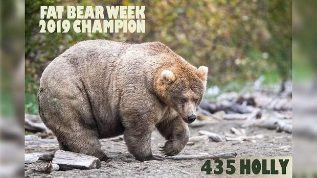 Gấu mẹ vĩ đại là có thật: Vừa tìm ra con gấu béo nhất mùa đông năm nay, nuôi con giỏi đến mức con người cũng phải bái phục - Ảnh 1.