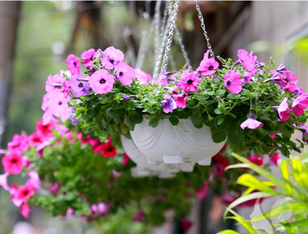 Mách bạn 10 loại cây cảnh trồng quanh nhà có khả năng xua đuổi kiến ba khoang hiệu quả - Ảnh 20.
