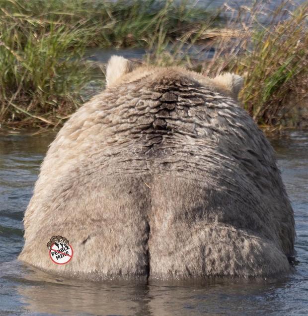 Gấu mẹ vĩ đại là có thật: Vừa tìm ra con gấu béo nhất mùa đông năm nay, nuôi con giỏi đến mức con người cũng phải bái phục - Ảnh 4.