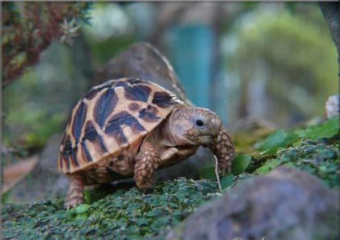 Bị đâm thẳng vào mai, con Rùa mới thấu hiểu 1 điều mà ai cũng mắc phải 1 lần trong đời - Ảnh 1.