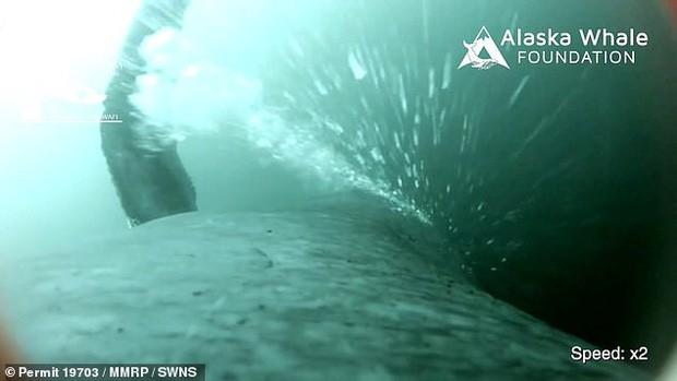 Video cực hiếm ghi lại quá trình cá voi đan lưới săn mồi: Cảnh tượng được xem là kỳ vĩ nhất của đại dương - Ảnh 2.