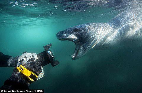 Báo biển hung hăng đi kiếm ăn, xé xác cánh cụt ngay giữa đàn - Ảnh 1.