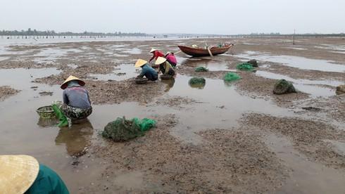 Hé lộ nguyên nhân khiến hơn 263 tấn ngao chết bất thường ở Hà Tĩnh - Ảnh 1.