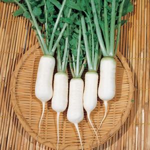 Củ cải trắng - thuốc quý cho sức khỏe mùa đông - Ảnh 1.