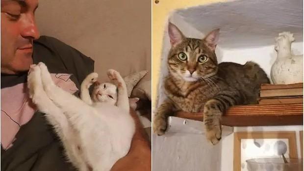 Được 2 boss mèo đánh thức, cặp vợ chồng may mắn thoát khỏi tai họa trời giáng - Ảnh 3.