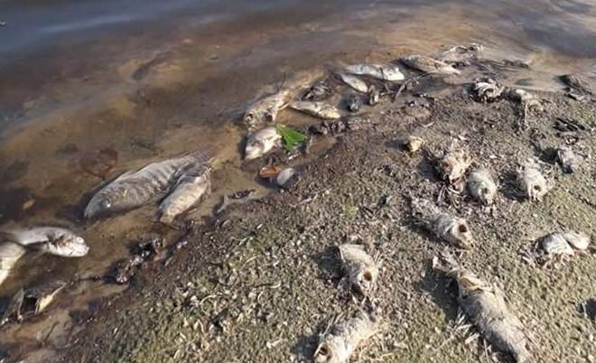 Cá tự nhiên chết hàng loạt do nước lòng hồ ô nhiễm - Ảnh 1.