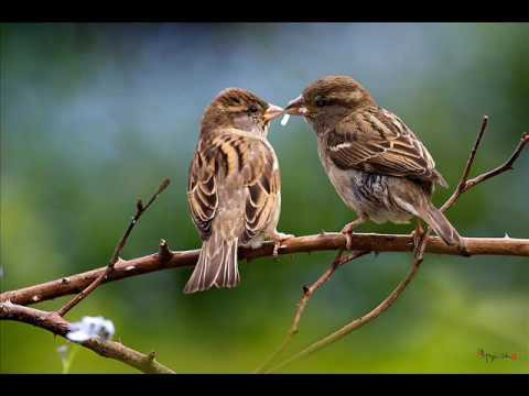 Loài vật chung thủy hiếm hoi của tự nhiên thường chọn vợ kén chồng như thế nào? - Ảnh 2.