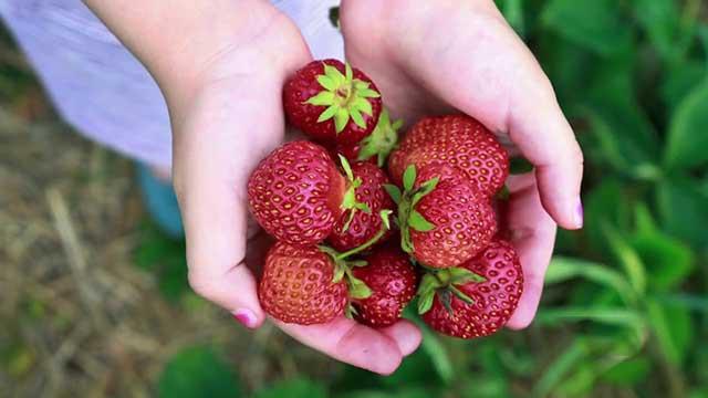 12 loại quả bổ dưỡng cho người bị ung thư trong và sau quá trình điều trị bệnh - Ảnh 7.