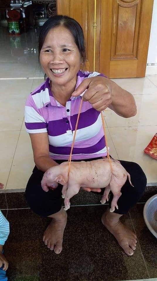 Dân hiếu kì tới xem lợn mẹ đẻ 3 con giống voi ở Nghệ An - Ảnh 1.