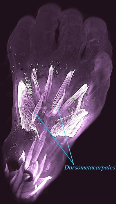 Một dấu ấn kỳ lạ trên thai nhi, 250 triệu năm tiến hóa được tua nhanh trong bụng mẹ - Ảnh 2.