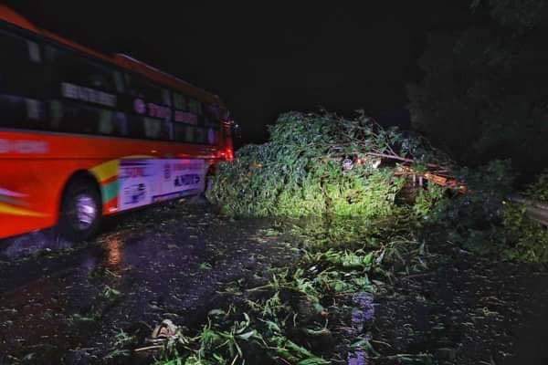 Bão đổ bộ trong đêm, cây ngã đổ la liệt, nhiều địa phương ở Phú Yên, Bình Định mất điện - Ảnh 4.