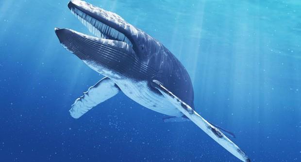 Một con cá voi có thể nặng đến cả trăm tấn nhưng làm sao khoa học biết được điều đó? - Ảnh 1.