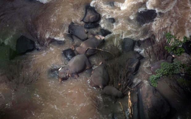 5 chú voi tử nạn khi lao xuống thác để cứu đồng loại rơi xuống đó - Ảnh 1.