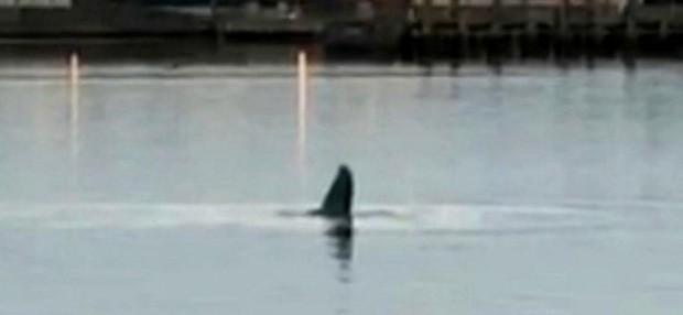 Cá voi lưng gù bơi lạc tới sông Thames đã chết - Ảnh 1.