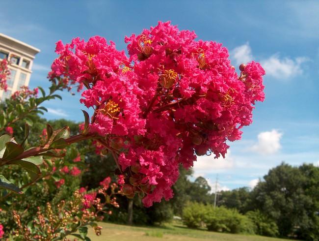 Người sinh vào mùa xuân-hạ-thu-đông nếu chọn đúng các loại cây may mắn bày nơi làm việc và tại nhà sẽ giúp công việc hanh thông, tiền tài đầy túi - Ảnh 4.
