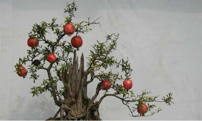 Người sinh vào mùa xuân-hạ-thu-đông nếu chọn đúng các loại cây may mắn bày nơi làm việc và tại nhà sẽ giúp công việc hanh thông, tiền tài đầy túi - Ảnh 8.