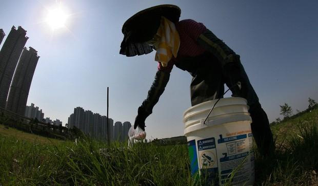 Nhật Bản nguy cơ mất hàng tỷ USD vì kiến lửa đỏ - Ảnh 2.