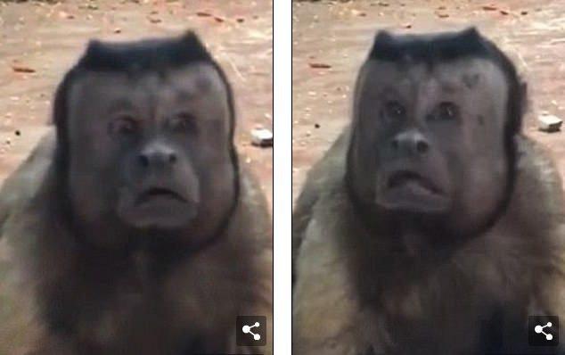 Chú khỉ mặt người đau khổ vì ế bền vững suốt 19 năm - Ảnh 1.