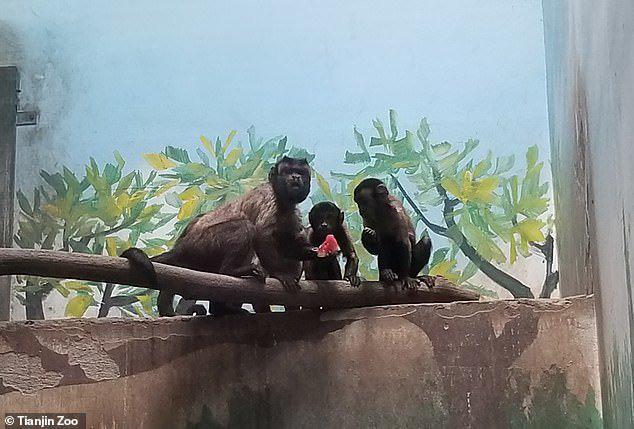 Chú khỉ mặt người đau khổ vì ế bền vững suốt 19 năm - Ảnh 5.