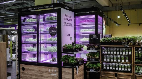 Mỹ: Công nghệ cho phép chuỗi bán rau trồng ngay tại cửa hàng - Ảnh 2.