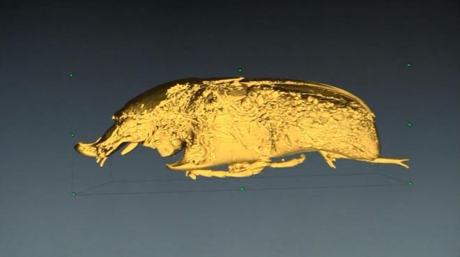 Tại sao côn trùng lại có kích thước nhỏ bé như vậy? Vì sao con gián mất đầu mà vẫn có thể sống và hô hấp bình thường? - Ảnh 5.