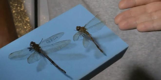 Tại sao côn trùng lại có kích thước nhỏ bé như vậy? Vì sao con gián mất đầu mà vẫn có thể sống và hô hấp bình thường? - Ảnh 6.