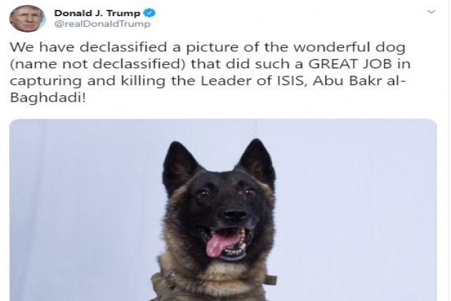 Quân đội Mỹ phát triển mũ bảo vệ tai cho chó nghiệp vụ - Ảnh 4.