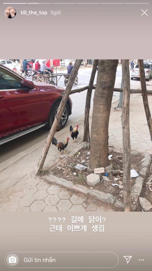 Fangirl Hàn sang Việt Nam đu AAA sốc nặng vì thấy... gà thả rông ngoài đường phố: Lạ lùng nhỉ, ngộ nghĩnh nhỉ! - Ảnh 3.