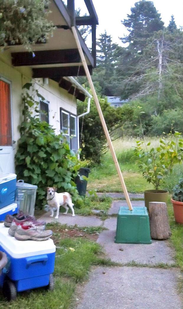 Những trường hợp thảm họa nhà trọ nhìn mà tức: Trăn rủ nhau quấn quýt trên trần nhà, nấm mọc chi chít khắp nơi và hàng rào có như không - Ảnh 5.