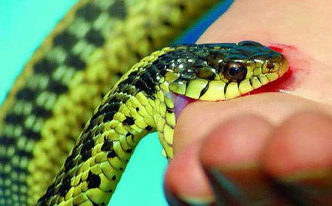 Không biết mình bị rắn độc cắn, mẹ vẫn cho con bú dẫn đến cái chết thương tâm của cả 2 mẹ con - Ảnh 2.