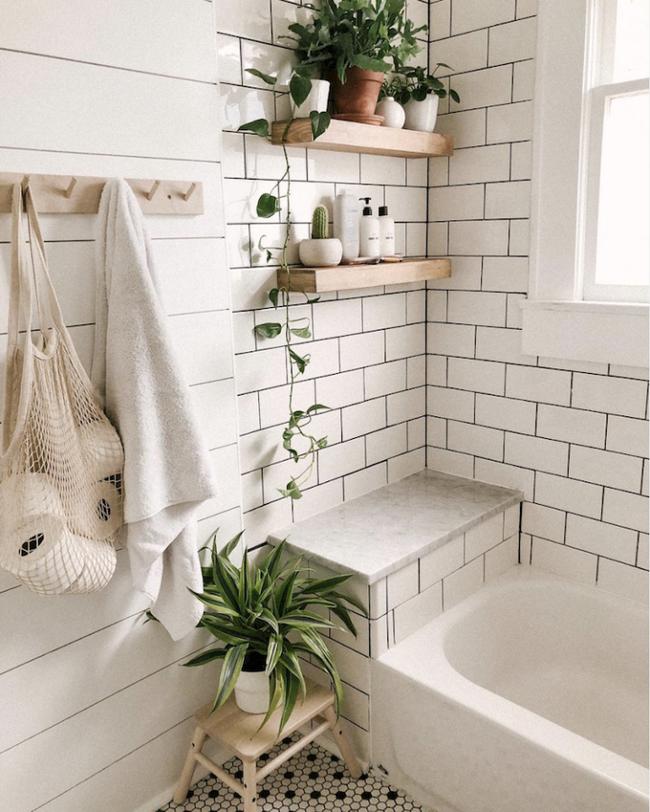 10 loại cây cảnh tốt nhất trồng trong phòng tắm để lấy thêm màu xanh và lọc không khí cho cả nhà - Ảnh 3.