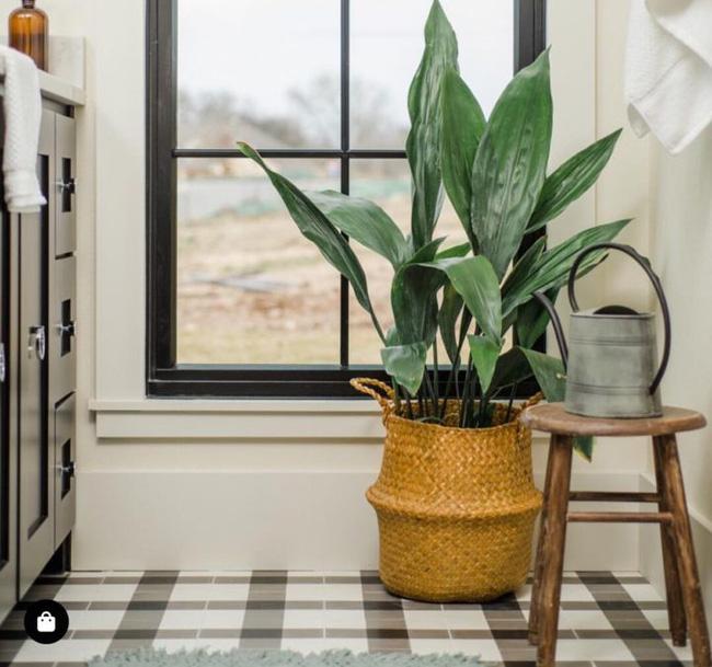 10 loại cây cảnh tốt nhất trồng trong phòng tắm để lấy thêm màu xanh và lọc không khí cho cả nhà - Ảnh 6.