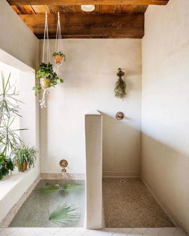 10 loại cây cảnh tốt nhất trồng trong phòng tắm để lấy thêm màu xanh và lọc không khí cho cả nhà - Ảnh 7.