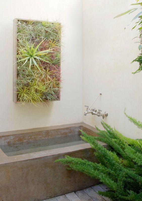 10 loại cây cảnh tốt nhất trồng trong phòng tắm để lấy thêm màu xanh và lọc không khí cho cả nhà - Ảnh 9.