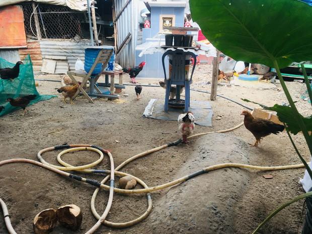 Gia đình Sài Gòn nuôi gà trên 10 ngôi mộ người thân trước cửa nhà - Ảnh 1.