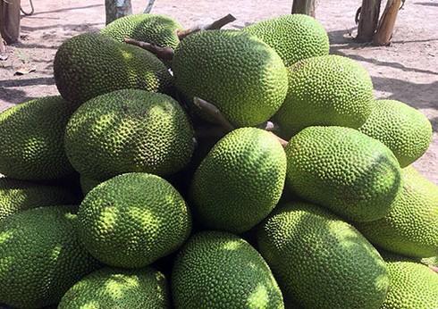 Nghịch lý mít Thái 50-70.000 đồng/kg, cam Việt rẻ như bèo chỉ 9-10.000 đồng/kg - Ảnh 1.