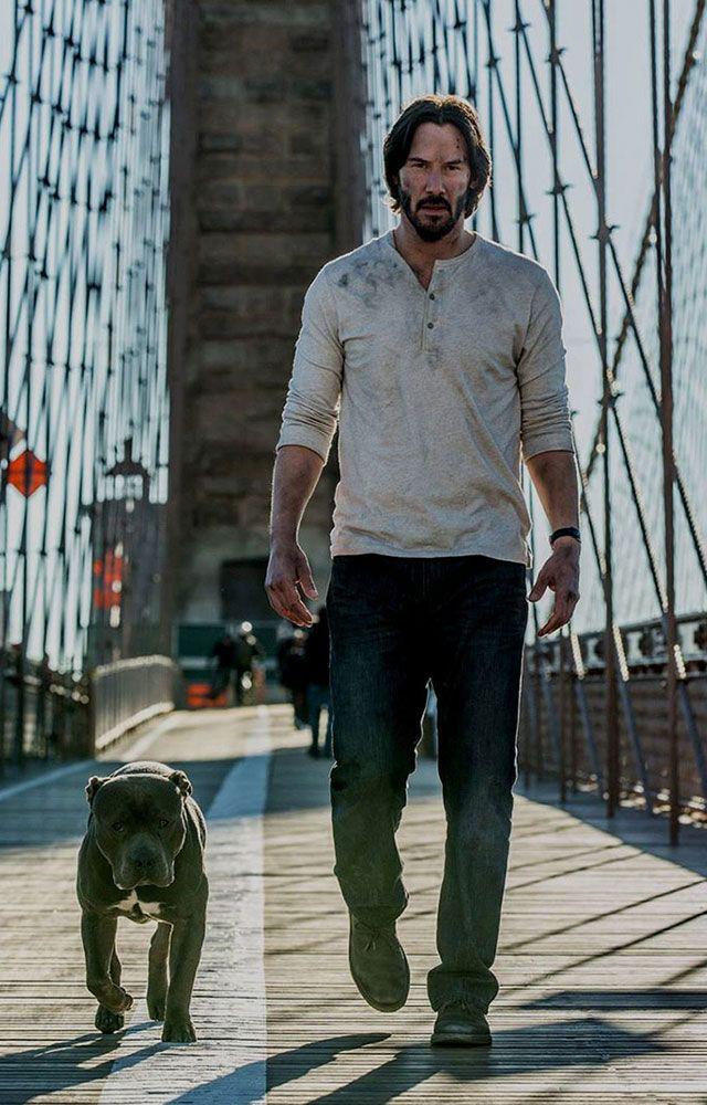 Sát thủ John Wick: Yêu chó điên cuồng trên phim còn sự thật ngoài đời ra sao? - Ảnh 3.